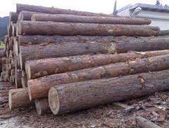 Поръчка За доставка на обла чамова дървесина