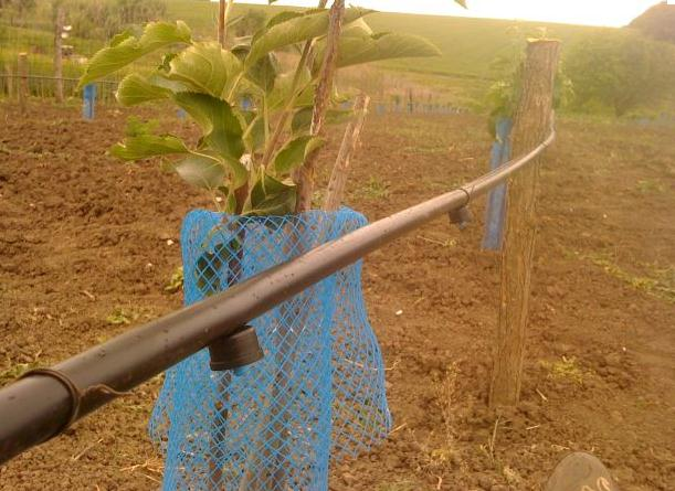 Поръчка Проектиране на системи за напояване на градини