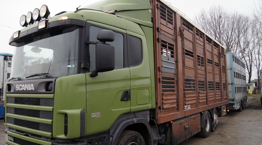 Поръчка Транспортиране на живи животни