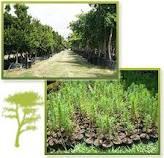 Поръчка Разработване на лесоустройствени проекти