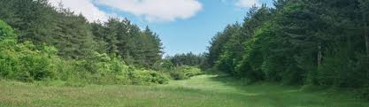 Поръчка Експертни оценки на горски масиви