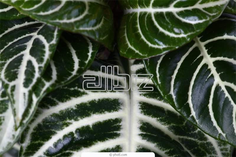 Поръчка Растително защитни препарати