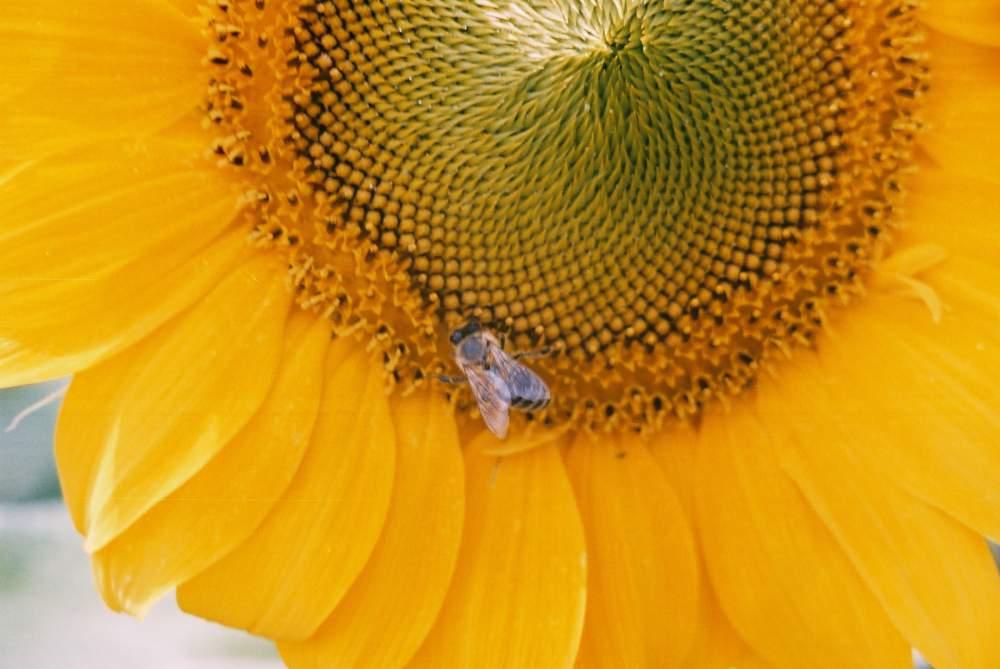 Поръчка Опрашване с пчели