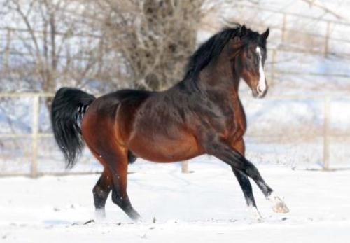 Поръчка Конна езда