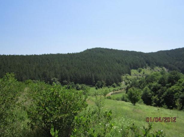 "Поръчка Имот - 24.431 дка - Местност ""Селска река"", Бургаска област"