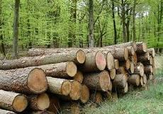 Поръчка Дърводобив