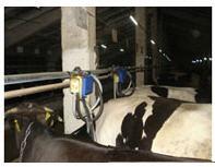 Поръчка Доставка на доилни инсталации за крави, овце и кози