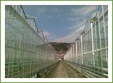 Строителство на оранжерии