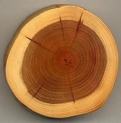 Преработка на дървесина