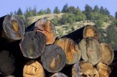 Търговия с дървесина и дървесни продукти