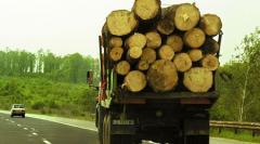 Еспорт на дърво и дървесина