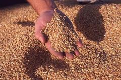 Съхранение на зърно
