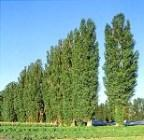 Преработка на дървесина Равена Лес ООД