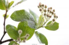 Защита на растения