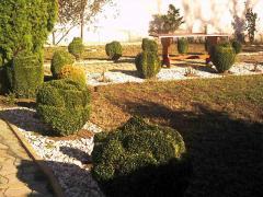 Озеленяване на вили и къщи