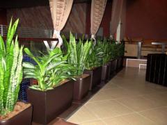 Обслужване и поддръжка на интериорни растения