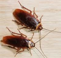 Борба против хлебарки