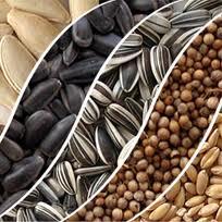 Производство на зърнени и маслодайни култури