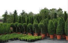 Широколистни дървета и храсти