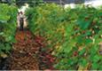 Консултации при избор на растителен материал