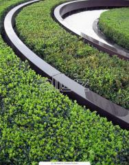 Озеленяване на територии