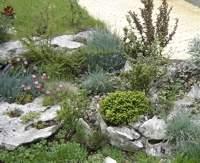 Озеленяване и засаждане