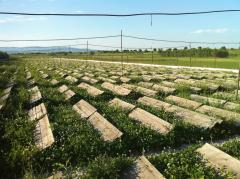Биомилениум - ферма за охлюви от вида Хеликс