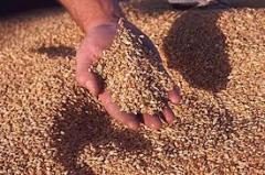 Почистване на зърно