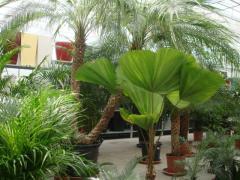 Градински център Флора