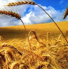 Съоръжения за селскостопанската промишленост