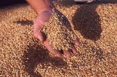 Изграждане на складови бази за зърно