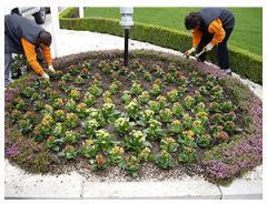 Грижата за градината