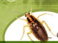 Унищожаване на хлебарки и други вредни инсекти