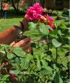 Поддъжка на градина